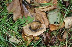 Snail At Home
