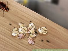 How to Kill Cockroaches or Ants Without Pesticide