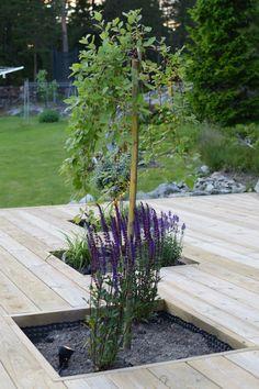 Sarah's Garden, Rooftop Garden, Garden Fencing, Dream Garden, Garden Landscaping, Home And Garden, Jungle Gardens, Beach Gardens, Outdoor Living Rooms