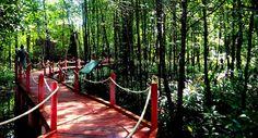 Globetrotter: Matang Mangrove Forest, Kuala Sepetang (Port Weld) #Perak #Malaysia