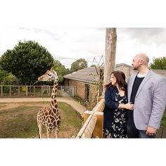 Planning a engagement with giraffes or a ZSL London zoo wedding? I love animals and jumped at the chance to photograph this couple with the giraffe for a London proposal for animal lovers Picnic Engagement Photos, Unique Engagement Photos, Engagement Photo Inspiration, Engagement Shoots, Engagement Photography, Wedding Photos, Wedding Ideas, Cat Wedding, Quirky Wedding