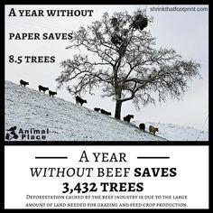 Paper vs beef
