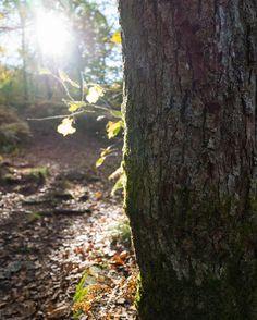 Light VS Dark #autumn #bourgogne #gr #france #explore #forest #tree #flare #bois #wandering #leaves #leica #leicaq #detail #nature #composition #lfi #glow #vertical
