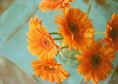 Nov_Blue_and_Orange_Palette_2010_Bunchens_and_Bits_Karina.jpg (500×357)