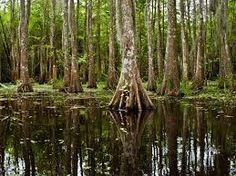 Image result for bayou