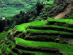 Beautiful rice plateaus. Brought to you by Shoplet.com - Everything for your business.