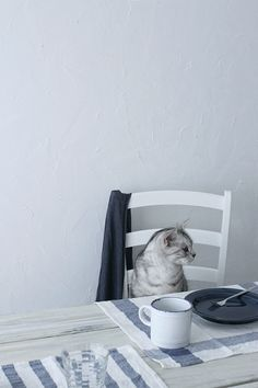 A cat sitting at the kitchen table with a cup of coffee and an empty plate. Pictures of cute cats and kittens. Cool Cats, I Love Cats, Baby Cats, Cats And Kittens, Animals Beautiful, Cute Animals, Animal Gato, Gatos Cats, Photo Chat