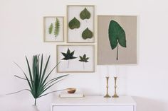 Frame Real Leaves to Create Original Botanical Art Framed Leaves, Plant Art, Plant Painting, Leaf Art, Floating Frame, Diy Frame, Botanical Art, Framed Wall Art, Gallery Wall