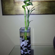 Own a little Bamboo Plant - DONE