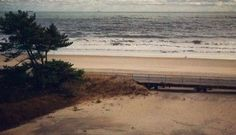 How to turn a Robert Moses road into a dune forest (in time for the next superstorm)   Capital New York