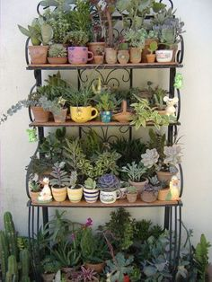 cup of plant Succulent Gardening, Cacti And Succulents, Planting Succulents, Cactus Plants, Garden Plants, Balcony Gardening, Indoor Cactus, Indoor Plants, Rusty Garden