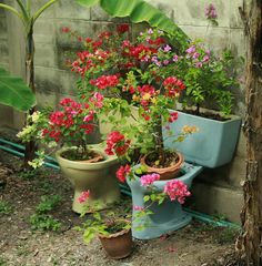 Toilet Planters - I probably wouldn't do it in MY front yard, but it's a cool concept considering how damn expensive those large ceramic planters are