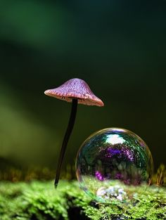 Kent Mathiesen miniature toadstool