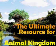A guide to all Animal Kingdom attractions - descriptions of every attraction, tips, videos, touring plans and custom maps