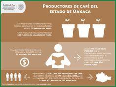 Seis viveros de alta tecnología ubicados en el estado de Oaxaca producirán tres millones de plantas con las que se sustituirán más de mil 500 hectáreas de cafetales viejos o enfermos, indicó la Secretaría de Agricultura, Ganadería, Desarrollo Rural, Pesca y  Alimentación (SAGARPA). SAGARPA SAGARPAMX