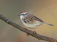 My favourite bird sparrow essay writer
