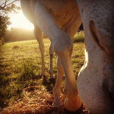 Horse. Greyton South Africa