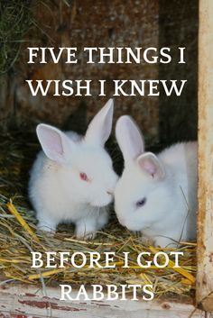 This list of five things I wish I knew about rabbits will save you time, frustration, and maybe even a few scars.