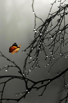 Explore amazing art and photography and share your own visual inspiration! Rain Wallpapers, Cute Wallpapers, Wallpaper Backgrounds, Rain Photography, Amazing Photography, Still Life Photos, Beautiful Nature Wallpaper, Nature Pictures, Pretty Pictures