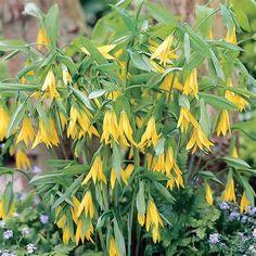 48 Best Vi Bates Woodland Wildflower Garden Rockford Il
