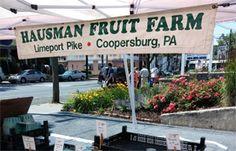 An Apple Festival, Farm Fair and…BOO! Fall Means Fun in the Saucon Valley