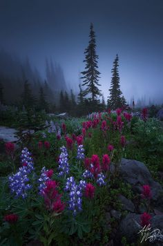 Flowers in hilly area at twilight hour.