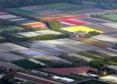 Tulip fields from the air.