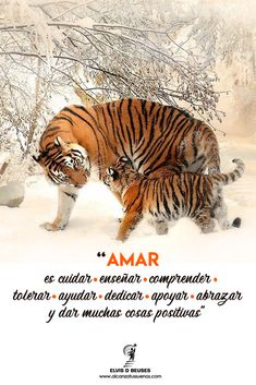 Tiger Quotes, Frases Love, Inspirational Prayers, Love Phrases, Inspire Me, Poem, Truths, Happy, Mindset Quotes