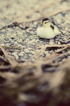 Instagram duckling