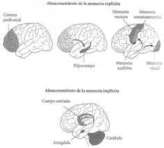tipos de memoria en el cerebro
