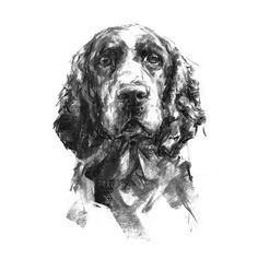 Springer Spaniel portrait - fine art dog print