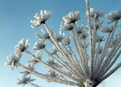 An apiaceae was covered with snow in front of a clear sky near Elbingerode, Germany. (Matthias Bein/AFP/Getty Images)