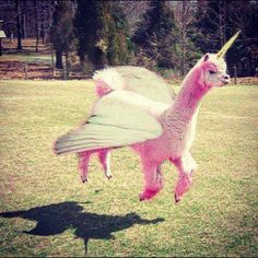 Pink Unicorn Pegasus Lama. Well, that's not something I expected to see today...