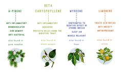 what-are-terpenes-2-06-15