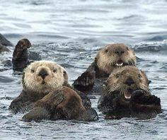 World's Cutest Animals   Travel + Leisure