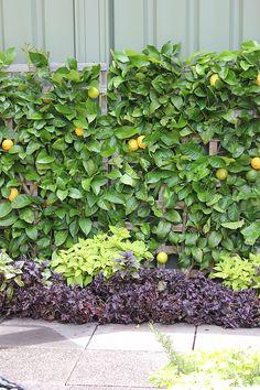 A Persian Carpet Garden With Espalier Lemon Pomegranate Trees