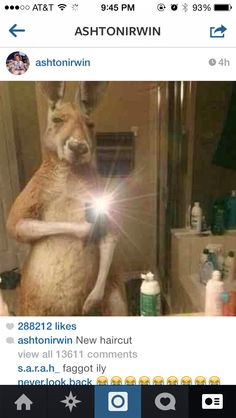 "Omg ash<<<is it bad that before looking at everything else I saw the kangaroo and immediately thought ""Ashton""??"