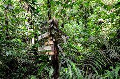 Wegweiser im karibischen Regenwald © Julia Schafhauser