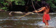 Akuntsu people: the native hunter fishing with a bow in the Madeira River, the tributary of the Amazon River. The Akuntsu are primarily hunter-gatherers, but supplement their diet with some swidden agriculture. Game is particularly abundant in their reserve because it acts as a refuge for animals whose habitats have been destroyed by deforestation in the surrounding area in Rondonia, Brazil