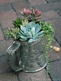 cute idea for potted plants... an old flour sifter