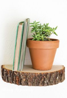 tree-stump--wood-slice-shelf