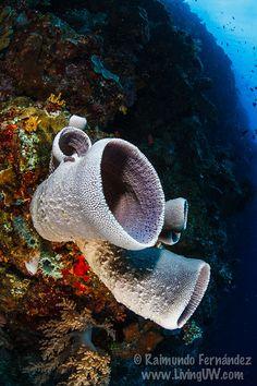 #sponges