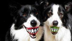 18 accesorios creativos para perros que harán a tu mascota feliz.   #perros #creatividad #accesorios #mascotas