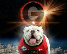 Georgia Bulldogs--GO DAWGS! Cool Super G graphics with Uga from the University of Georgia in Athens. Georgia Bulldogs Football, Sec Football, College Football Teams, Bulldog Game, Bulldog Puppies, Bulldog Wallpaper, Puppy Finder, Georgia Girls, University Of Georgia
