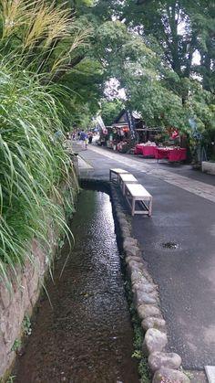 Jindaigi