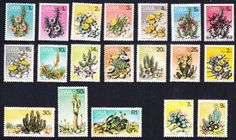 SWA-Succulents-Definitives-19v-COMPLETE-SG-241-59a