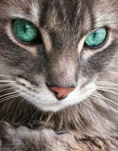 Green eyed beauty….