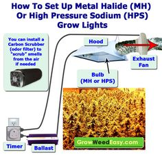 This diagram explains how to set up up a HID grow light, including MH and HPS lights.