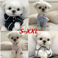 Luxury Clothes for Dog Fashion Dog Pajamas Pet Clothing for Small Medium Dogs Clothes Coat Yorkies Chihuahua Bulldogs Jacket Baby Animals, Cute Animals, Dog Pajamas, Animal Fashion, Dog Fashion, Luxury Fashion, Shih Tzu Puppy, Shih Tzus, Medium Dogs