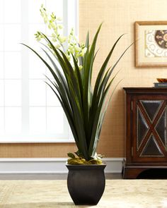 12 Best EMF Protection images   Indoor house plants